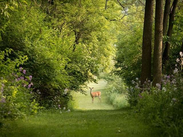 2 Ways to Protect Your Trees, Shrubs & Perennials from Deer in St. Louis